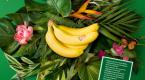 La Banane de Guadeloupe & Martinique